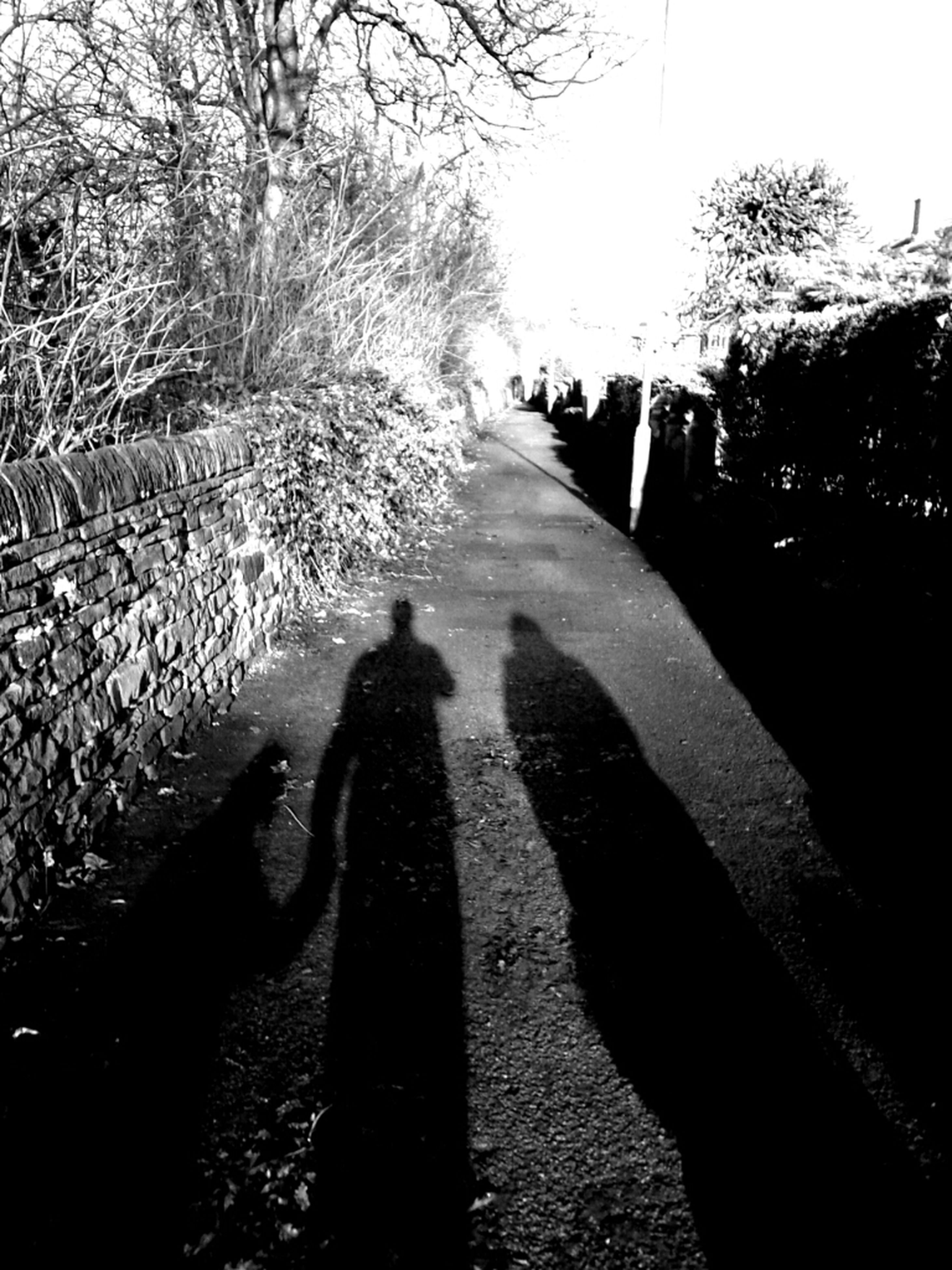 lifestyles, tree, shadow, leisure activity, men, sunlight, togetherness, rear view, walking, the way forward, person, silhouette, bonding, outdoors, street, nature, unrecognizable person
