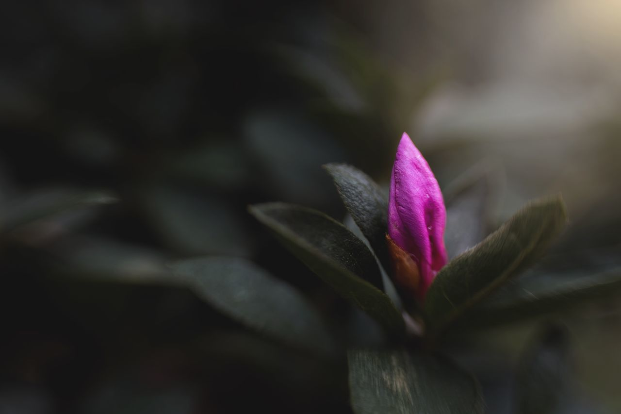 touch of pink Flower Nature Beauty In Nature Flower Head Budding Flower EyeEm Nature Lover Tomate_pauline Oaktreeshutterbug No People Close-up Outdoors Plant Growth