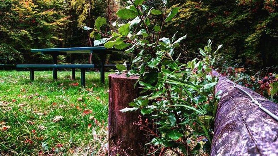Likeit Loveit Goood Westonshore Westwood Grass Greengrass Bark Plants Beach Picknick Picknickbench Trees Woods Leaves Steps