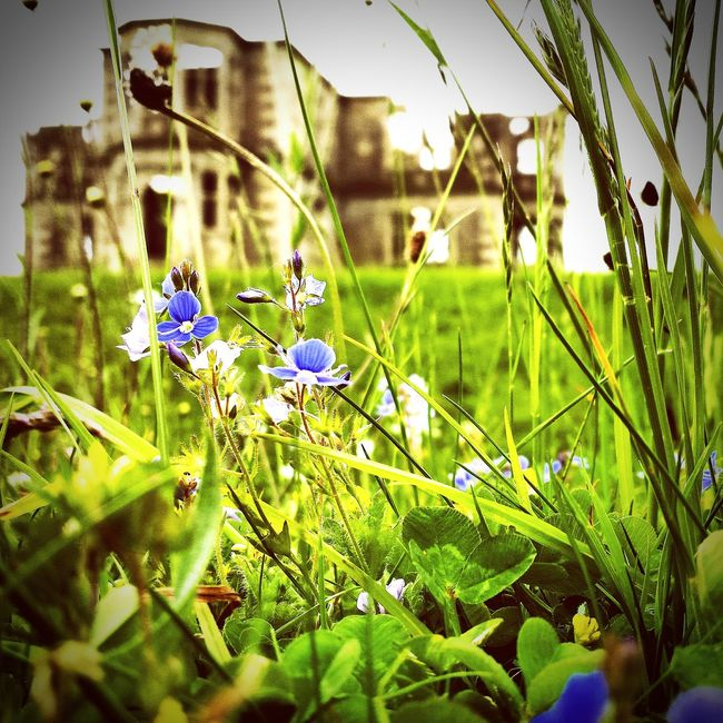Old Ruins Backgrounddefocus Selectivefocus Out Of Focus On Purpose Instagram Flowerstagram Wildflowers Romantic Beauty Of Decay