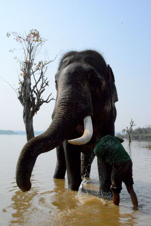 Animal Themes Animal Trunk Beauty In Nature Clear Sky Day Domestic Animals Elephant Full Length Mammal Nature No People One Animal Outdoors Sky Standing Tree Water