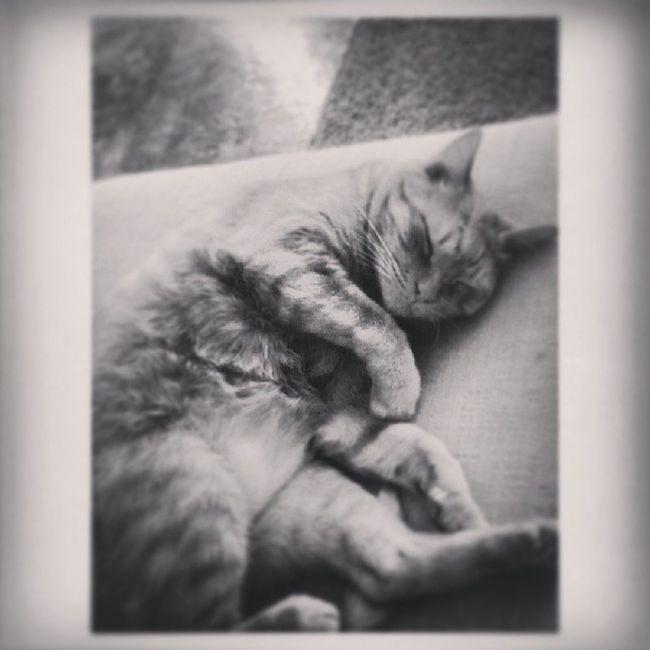 My fat little man. Lovethiskitty Kittykitty Stud Snuggledup comfy