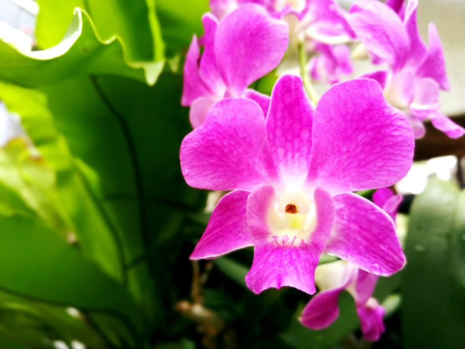 Orchids. Orchid Orchids Orchid Blossoms Orchid Flower Orchidslover Orchids Garden Orchids Collection Orchid Blossoms Orchid Flower Orchids Flowers Flower Collection Flower Photography