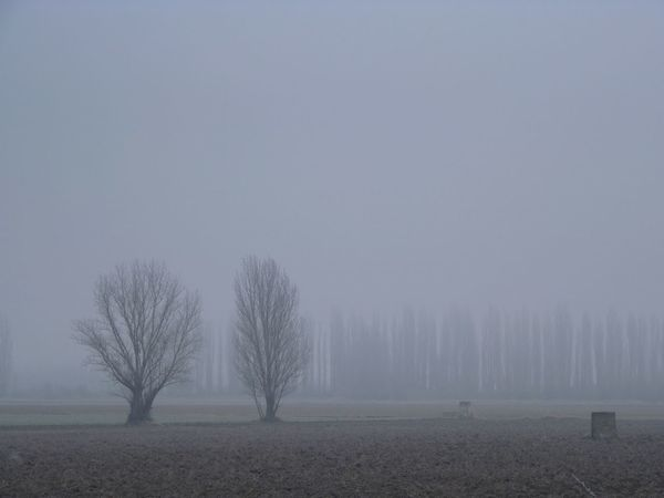 Día de niebla 03 Day Fog Fog Day Frosty Mornings Landscape Nature No People Outdoors Tree
