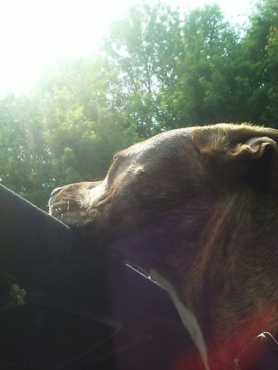 Jaxon loves the sun roofEnjoying Life Hanging Out Dogstyle Beautiful Day