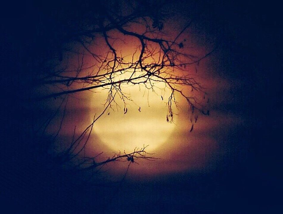 GOOD EVENING 🌚🌝🌕😊 Bare Tree Nature Tree Silhouette Branch Sky No People Tranquility Beauty In Nature Growth Cloud - Sky Low Angle View Outdoors Close-up Day Daslebenistzukurzumtraurigzusein Lovely Still Life Moon Naturelovers Enjoying Life Herbststimmung Autumn My World ♥ Beauty In Nature