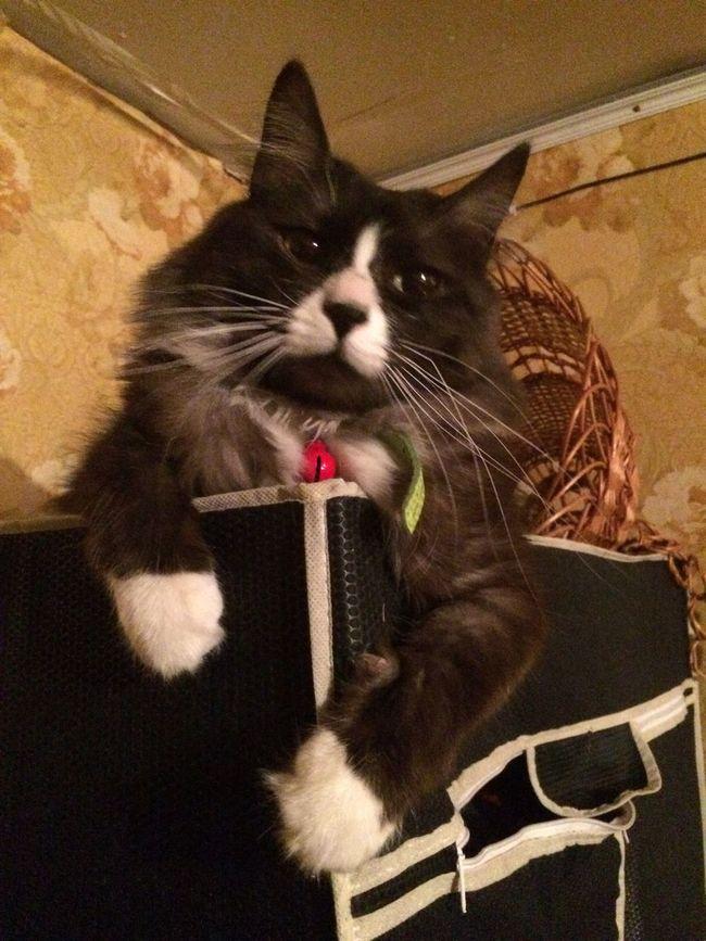 Брутальный Кот!😼😼😽