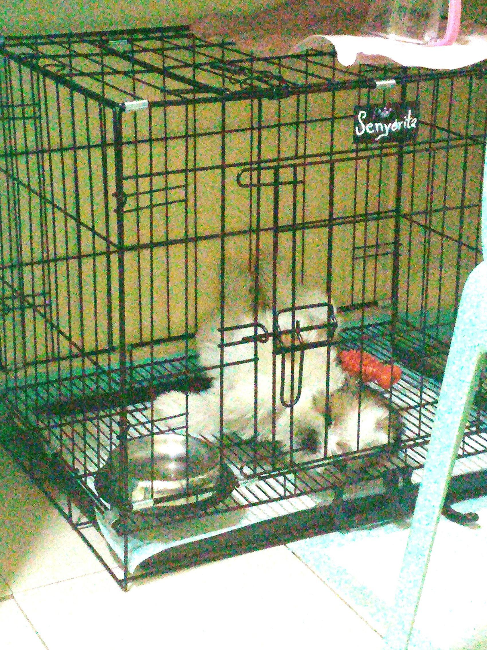 Good night everyone! Senyorita Senyoritatheshihtzu Shihtzu My Little Puppy