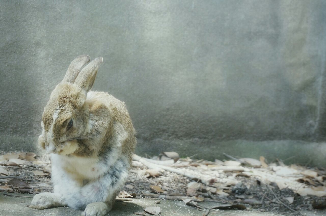 Beautiful stock photos of easter bunny, Animal Themes, Animal Wildlife, Animals In The Wild, Bunny