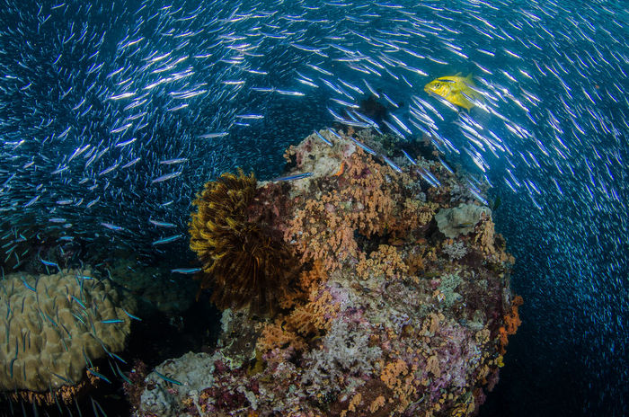 Jacks Hunting Animals In The Wild Beauty In Nature Coral Fish Jacks No People Sea Life UnderSea Underwater Underwater Photography