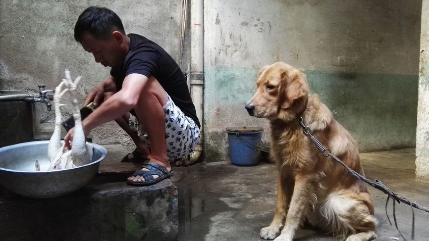 生活随拍 Dog Pets One Animal Wet Water Domestic Animals Washing