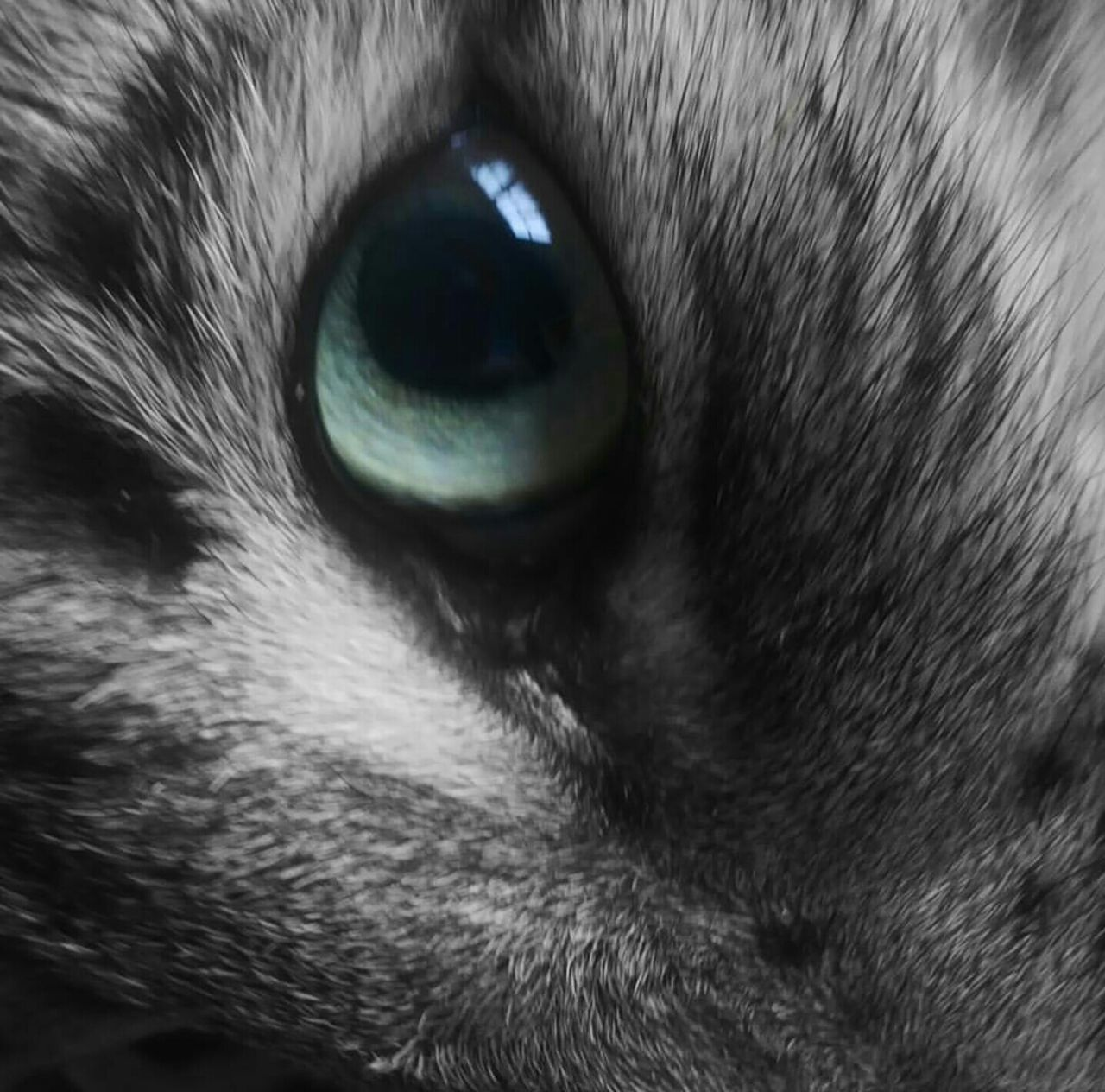 pets, one animal, domestic animals, animal themes, domestic cat, animal head, animal eye, portrait, close-up, mammal, feline, looking at camera, no people, full frame, backgrounds, indoors, day, eyeball