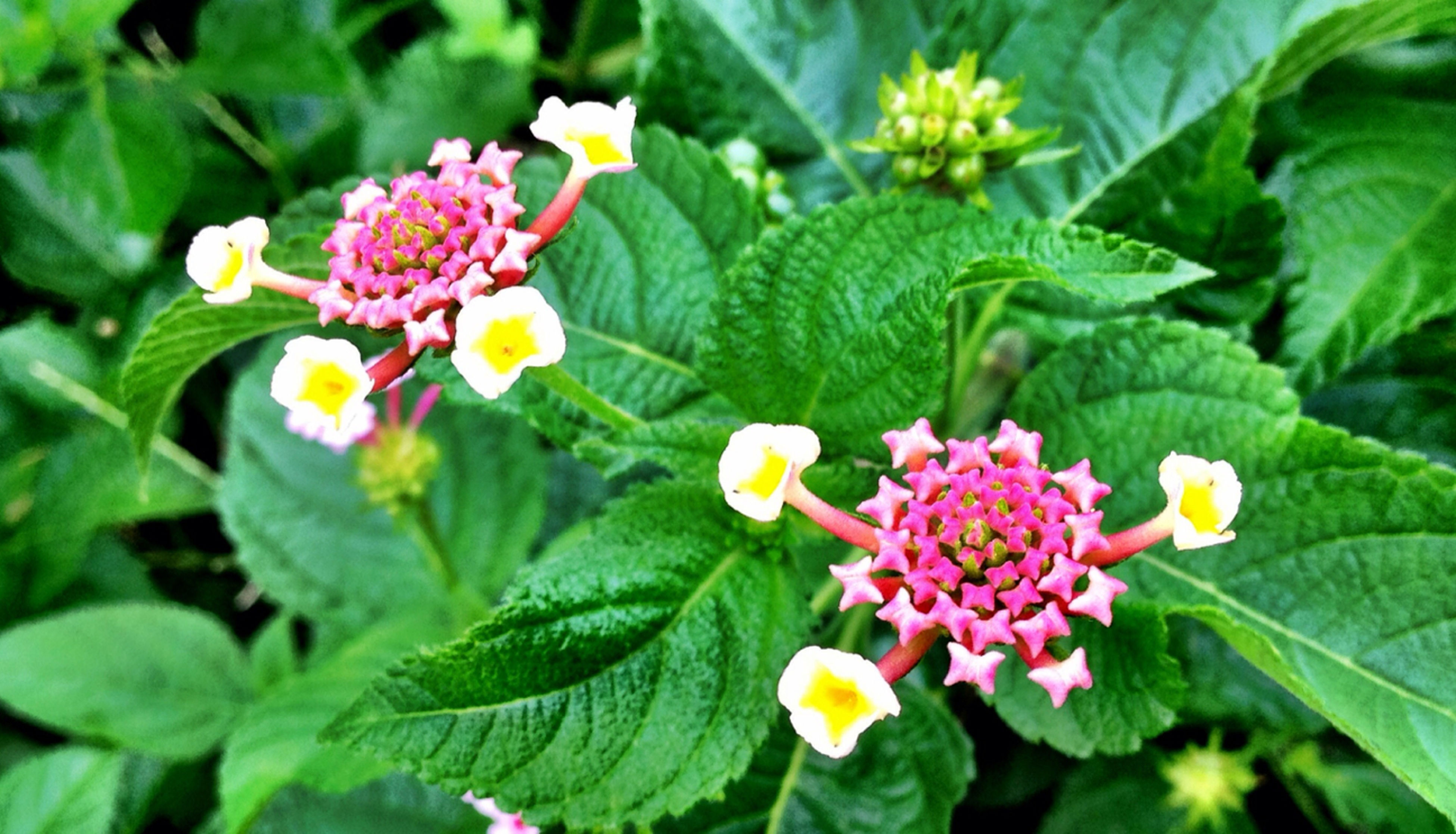 flower, freshness, leaf, growth, petal, fragility, beauty in nature, green color, flower head, plant, yellow, blooming, nature, close-up, bud, focus on foreground, in bloom, blossom, day, outdoors