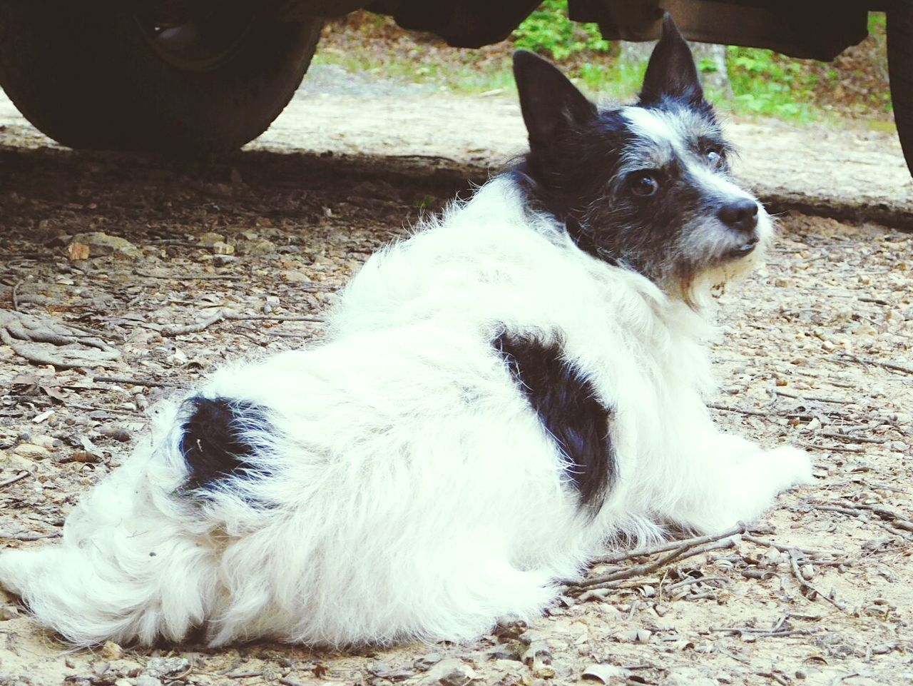 My Scampers Domestic Animals Mammal Animal Themes One Animal Pets Lying Down Animal Outdoors Day No People Close-up The Great Outdoors - 2017 EyeEm Awards Doggy Love Dogs