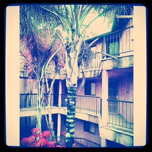 Mini Palm Trees Jungle My Cali