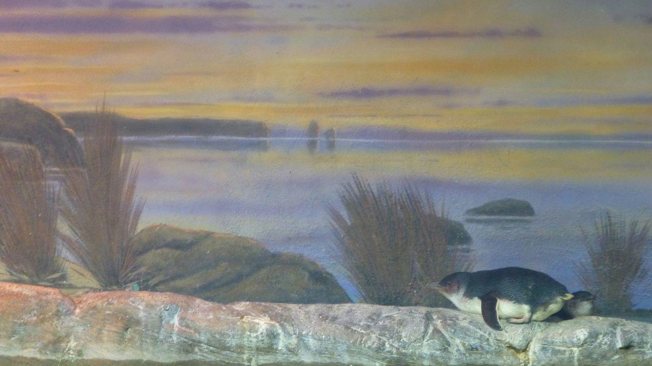 Animals In The Wild Water Animal Wildlife Nature Animal Themes No People Bird Mammal Panguin
