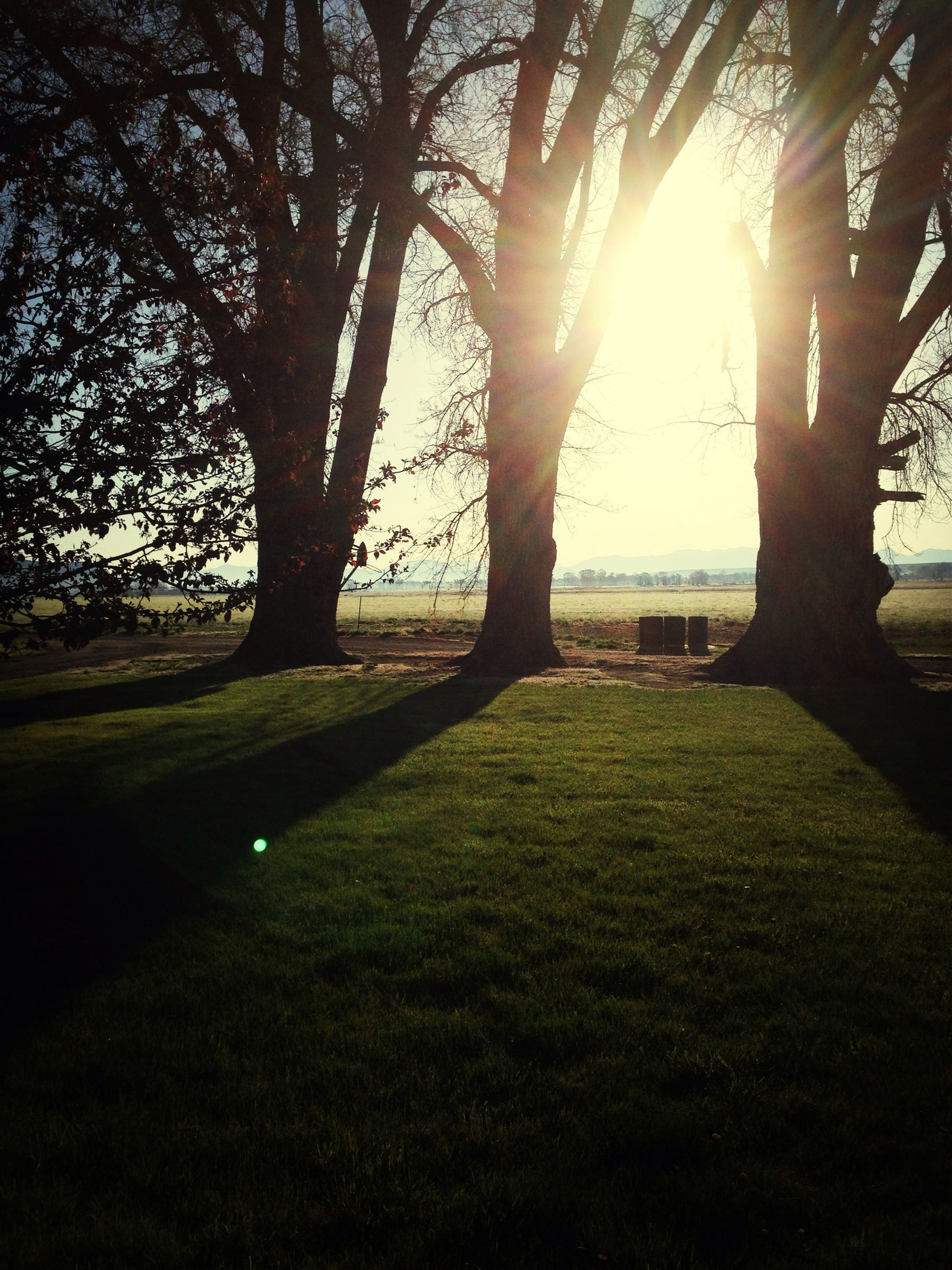 tree, grass, sun, sunlight, sunbeam, tranquility, lens flare, tree trunk, grassy, tranquil scene, field, nature, growth, beauty in nature, park - man made space, shadow, branch, scenics, landscape, sunny