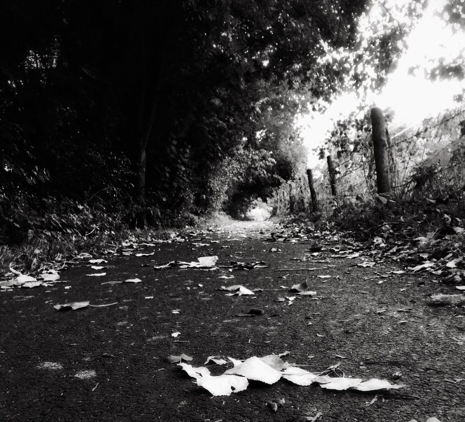 Tree Forest Leaf Narrow The Way Forward Tranquil Scene Non-urban Scene Tranquility Solitude Scenics Nature Footpath Surface Level Day Diminishing Perspective Outdoors Stream Long Beauty In Nature No People Abingdon-on-Thames