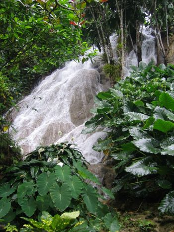 Beauty In Nature Branch Day Forest Freshness Green Green Color Growth Jamaica Jamaican Leaf Lush Foliage Nature No People Non-urban Scene Outdoors Plant Plant Life Power In Nature Rock Scenics Stream Tranquil Scene Tranquility Waterfall
