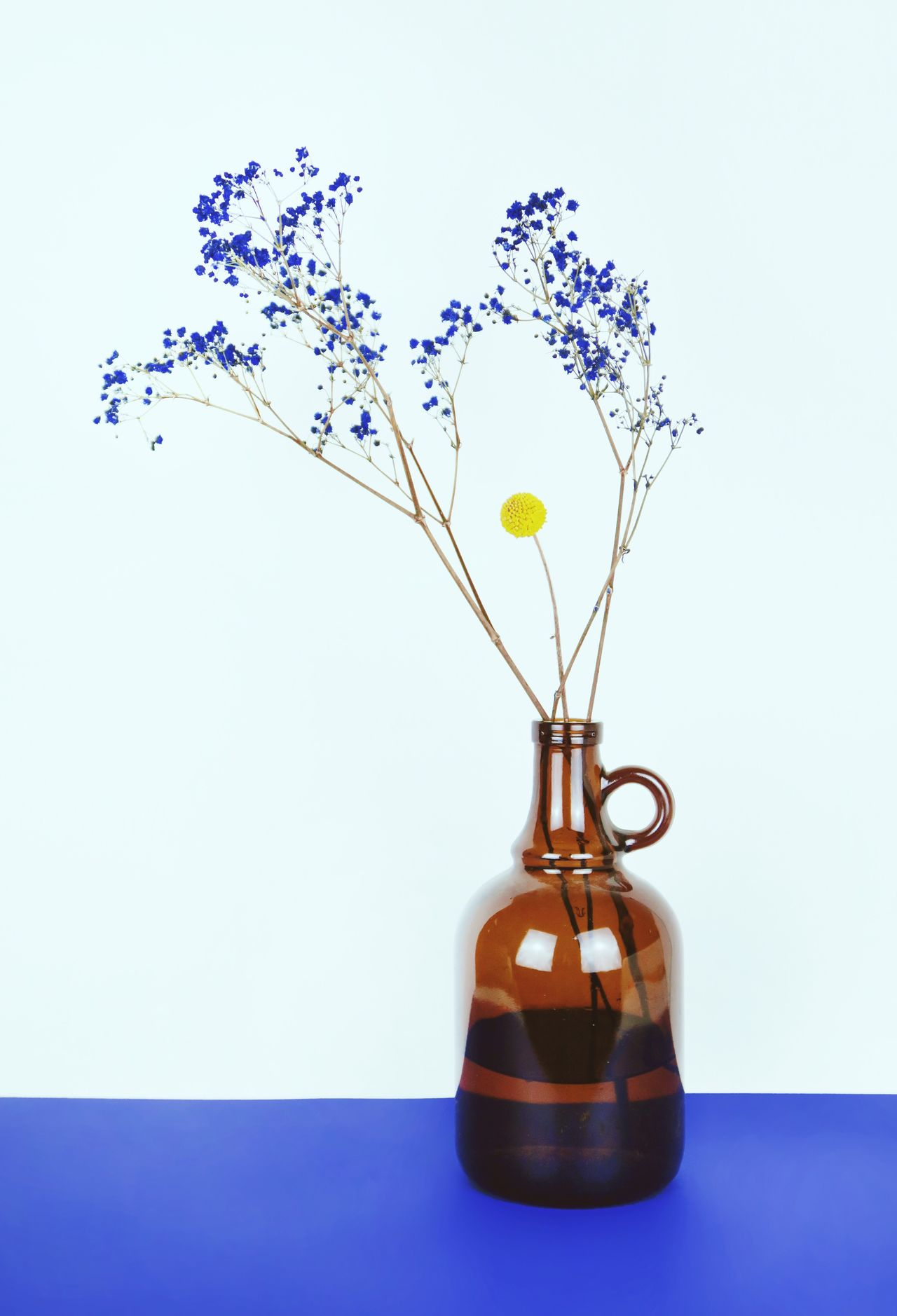 Vase Flower Studio Shot Table Lavender Plant Nature No People Growth Indoors  White Background Plant Flowers Spring Dry Flower  Blue Flowers Flower Arrangement Spring Flowers Fragility Close-up Day
