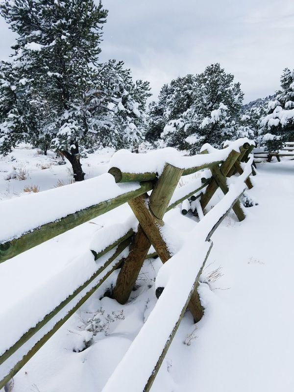 Winter Snow Tree Cold Temperature Nature No People Rural Scene Outdoors Landscape Scenics Beauty In Nature Day Sky Nevada, USA Mountainscape Mt Charleston Fence Photography Fences