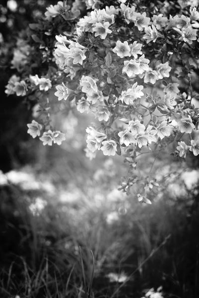 Dream.. Blackandwhite EyeEm Nature Lover