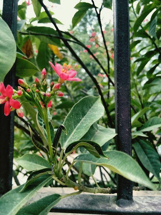 Breaking through EyeEm Nature Lover EyeEm Best Shots Nature EyeEm Soft And Hard Iron Rods Focus On Foreground Flowers Breaking Through  Leaves Sharp