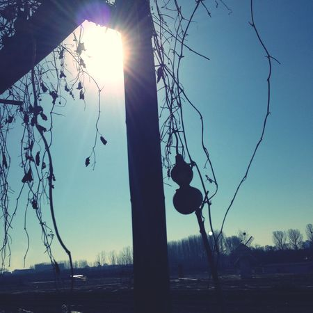 Gourds Plants Sunshine Nature Eye4photography  EyeEm Best Shots Enjoying Life Enjoying The Sun