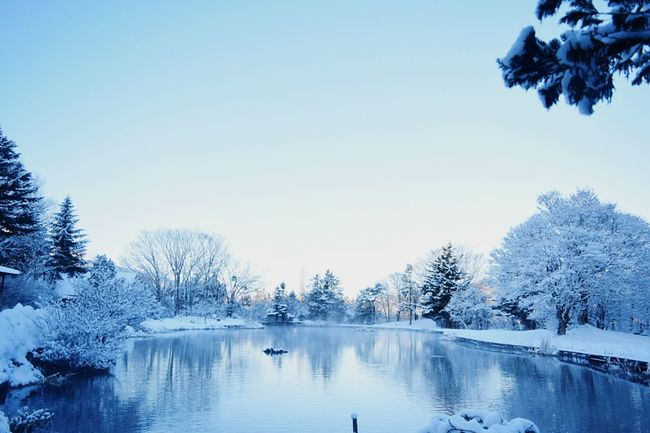 Escaping from the city, I always find the most important thing, Nature and Love. Thankful for this planet I was born at. Finally I Am In Nature Nature WHiTE WORLD Blue And White Snow Showcase: February Early Morning at Yamanakako , Japan (bottom of Mt. Fuji)
