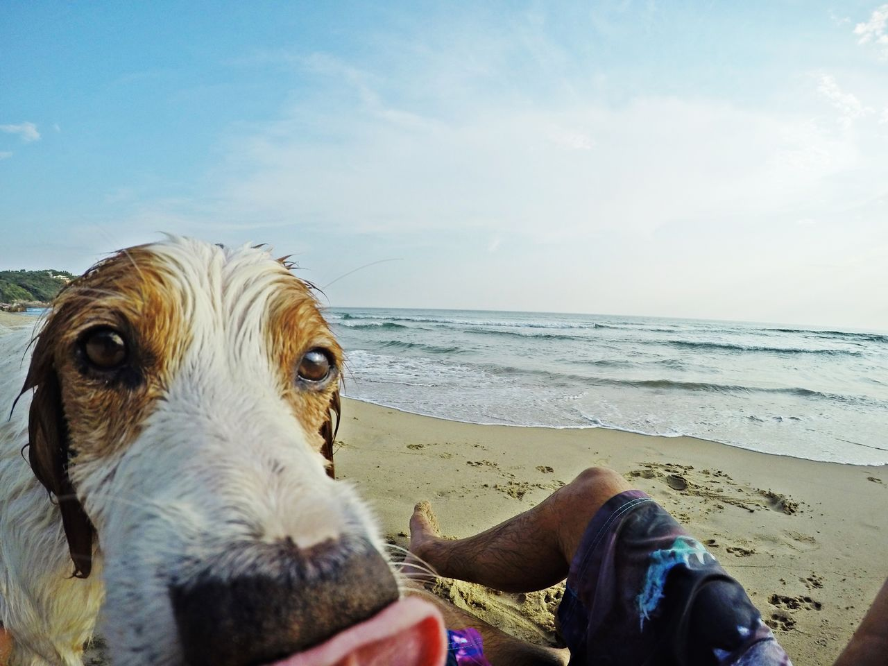 Sea Traveling Travel Travelling Travel Photography Dog Dogslife Dogstagram Dog Swimming Dog Life Gopro Goprohero4 Italy Sperlonga Sperlong,Italy Sperlonga,Italy 300gradini, Gaeta