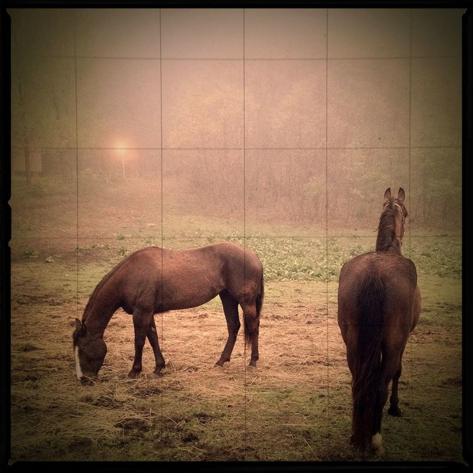 Morning fog in the pasture | edited with the new iPhone app Viewmatic. Viewmatic