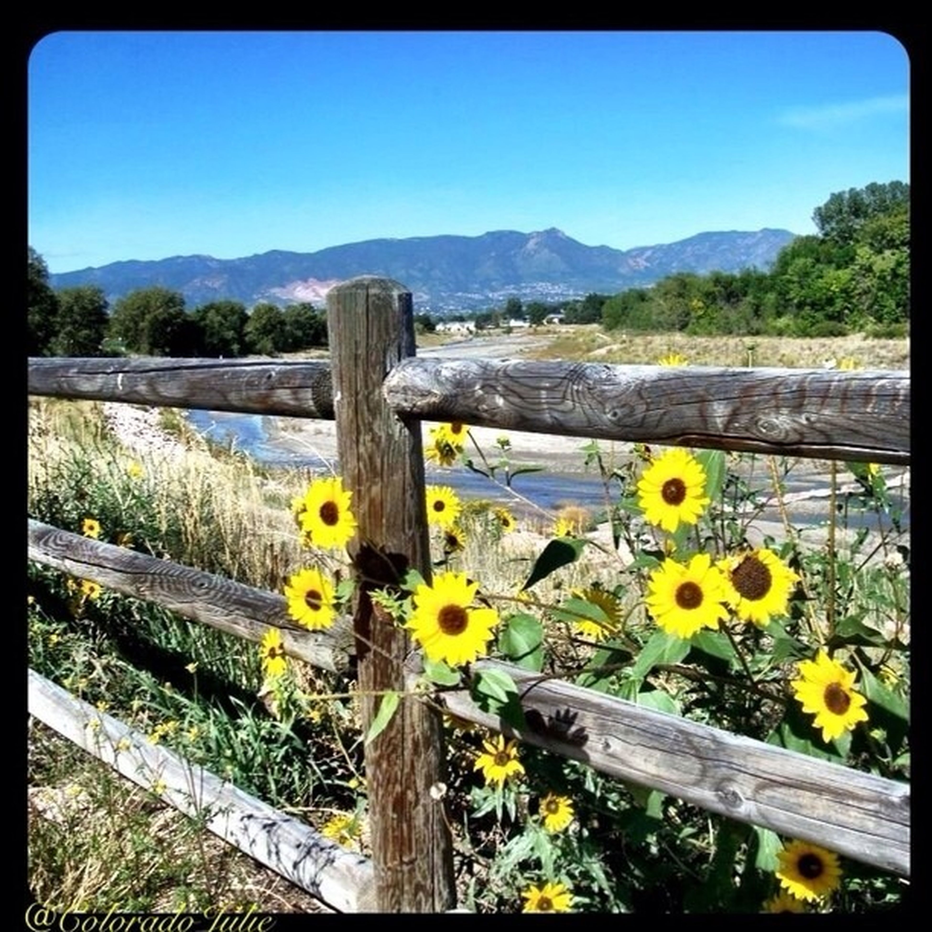 flower, transfer print, yellow, beauty in nature, railing, nature, tranquil scene, tranquility, mountain, water, plant, lake, auto post production filter, growth, scenics, wood - material, sky, tree, clear sky, fence