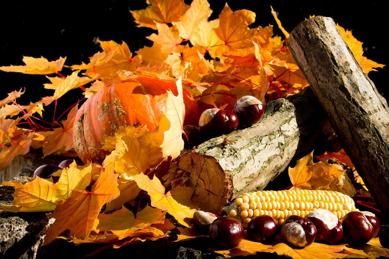 Beautiful stock photos of pumpkin, Autumn, Chestnut, Ensemble, Fall