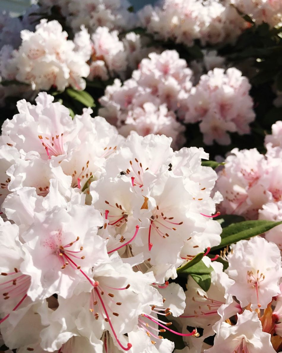 Blossom Blooming Flower Growth Freshness Close-up Nature Fragility Petal Springtime Tree No People Plant Flower Head Branch Beauty In Nature Rhododendron Day Outdoors Plum Blossom