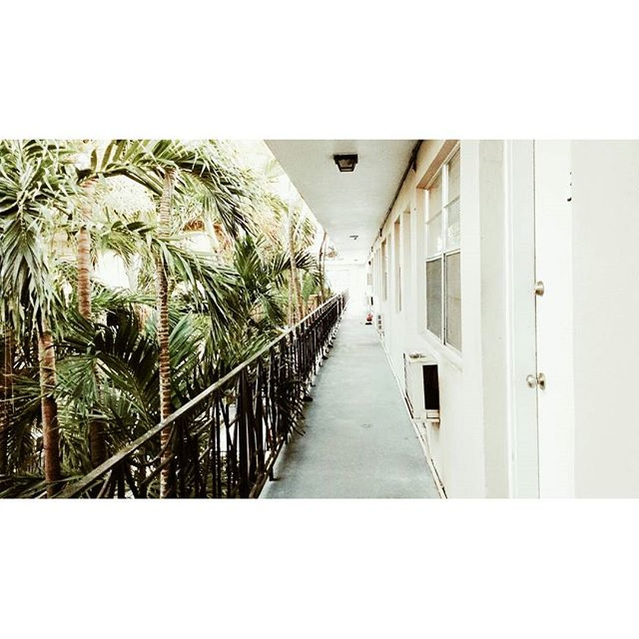 Palms 🌴 . . . CoconutGrove Green White Martha 'shouse MiamiLife