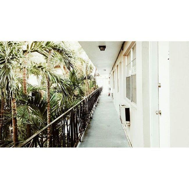 Palms 🌴 . . . CoconutGrove Green White Martha 'shouse MiamiLife