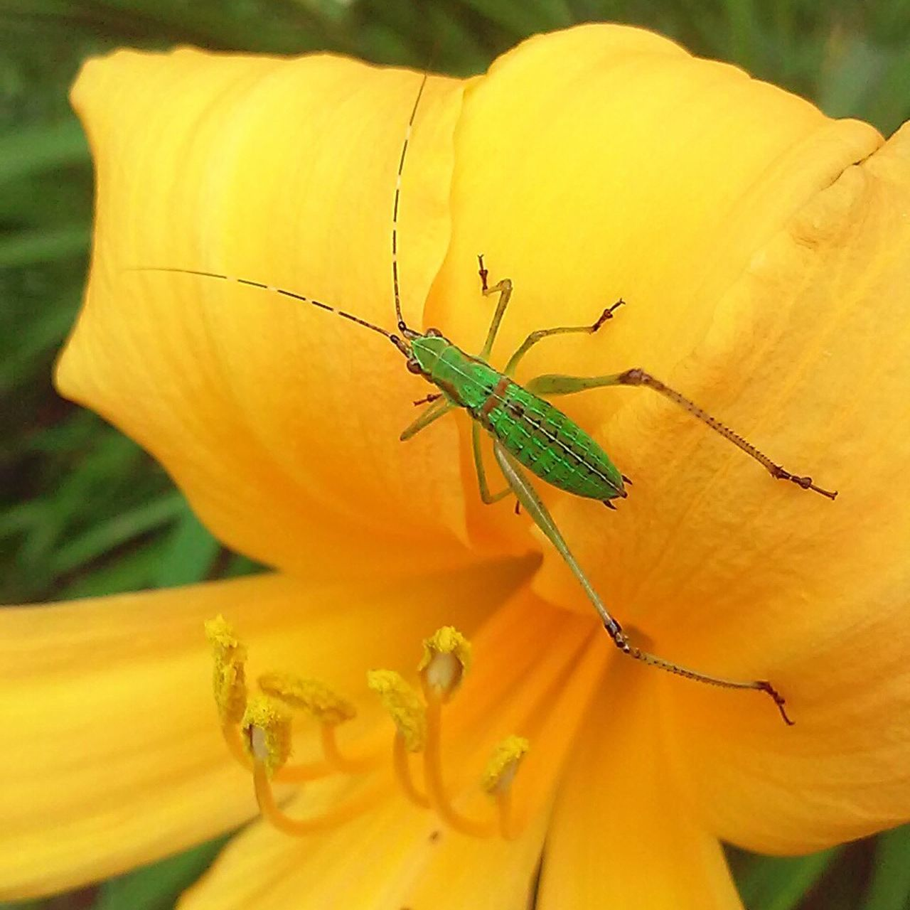 insect, animals in the wild, animal themes, one animal, animal wildlife, nature, day, plant, outdoors, close-up, no people, growth, flower, yellow, green color, focus on foreground, beauty in nature, fragility, freshness, perching, flower head