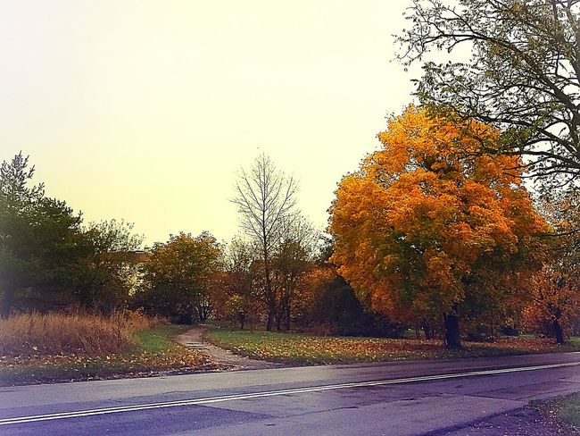 Tree Outdoors No People Nature Road Autumn Autumn Colors Autumn Collection