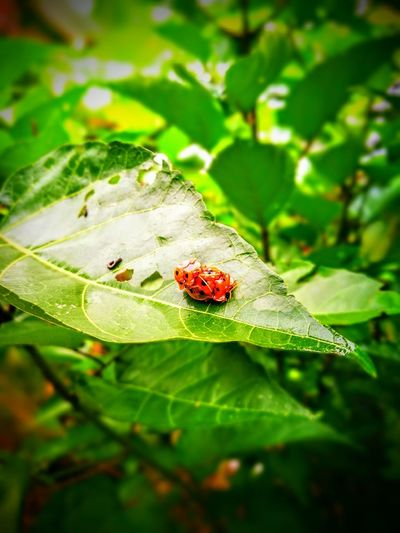 nature One Animal Animals In The Wild Animal Themes Animal Wildlife Green Color Nature Ladybug