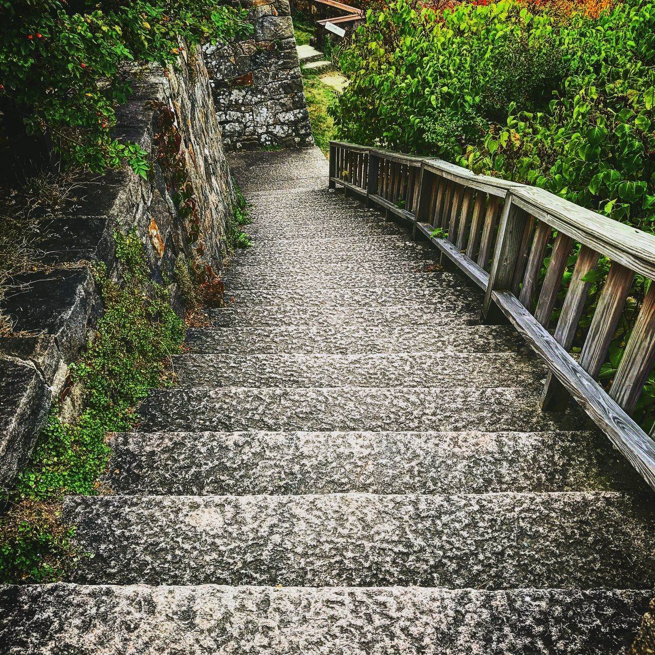 railing, steps, outdoors, the way forward, day, nature, no people, plant, tree, growth, built structure, architecture, grass, beauty in nature