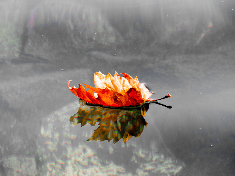 Autumn leaf at Lake Bolsena Flower Flower Head Lake Nature No People Outdoors Reflection Water