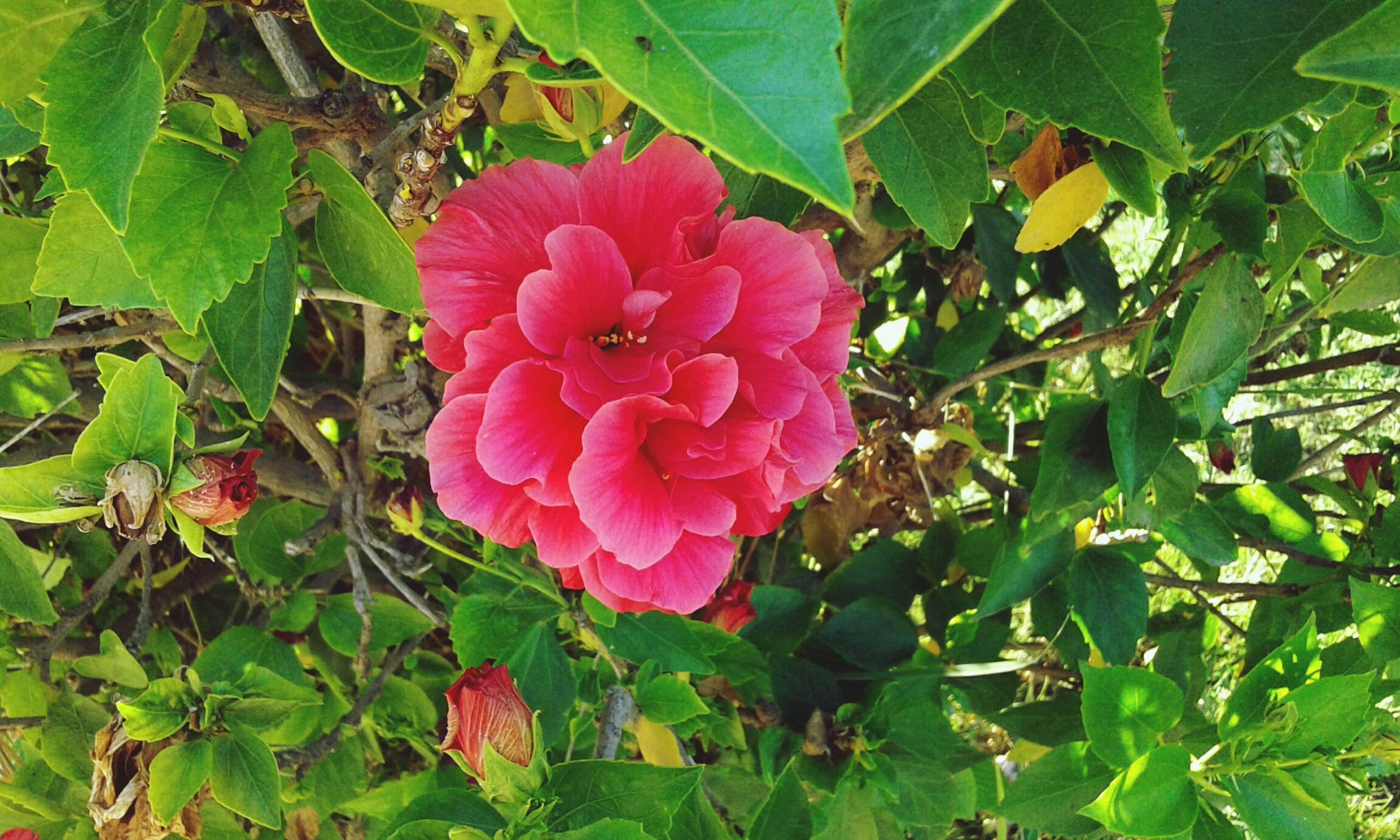 flower, growth, freshness, leaf, beauty in nature, fragility, plant, green color, petal, nature, pink color, flower head, close-up, blooming, outdoors, focus on foreground, botany, day, in bloom, no people, blossom, green, growing, tranquility, natural pattern, lush foliage, selective focus