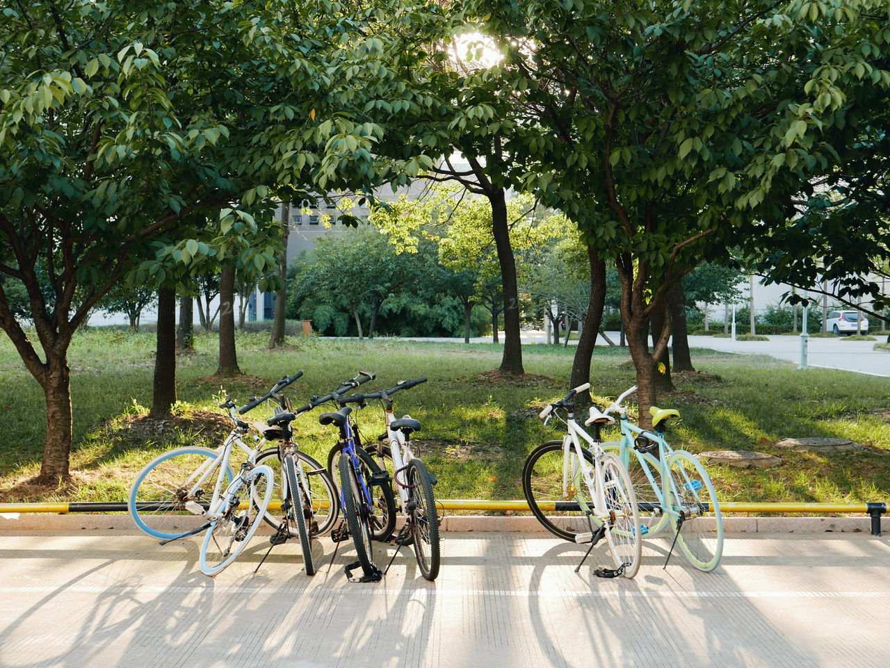tree, bicycle, transportation, day, nature, growth, outdoors, bicycle rack, park - man made space, no people, tranquility, sunlight, tranquil scene, green color, beauty in nature, scenics, landscape, grass, sky