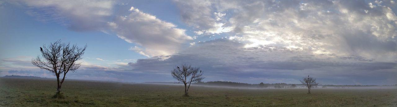 Jackdaw Bird Tree Morning SkyPanorama produced by Google Photos. I ride around the same tree.