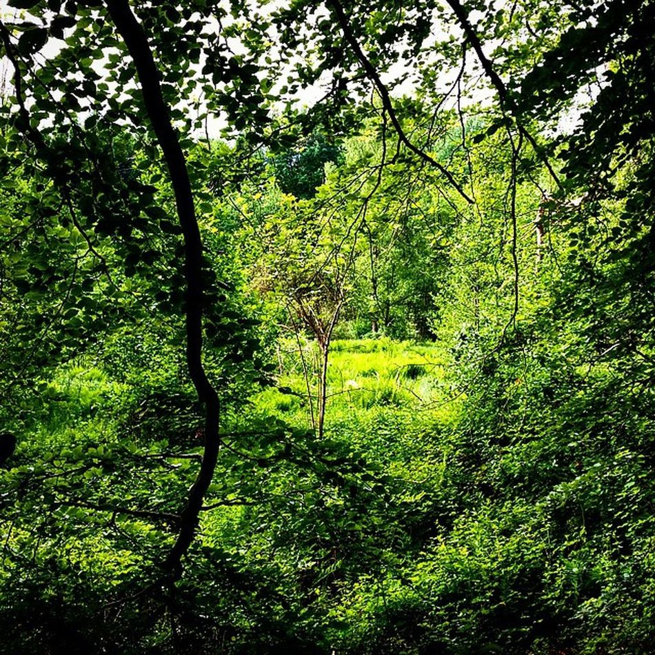 Wald Grün Natur Naturfoto natureloversnaturefolkbpa_naturenaturelovers_grfotototalSaarlandDeutschland