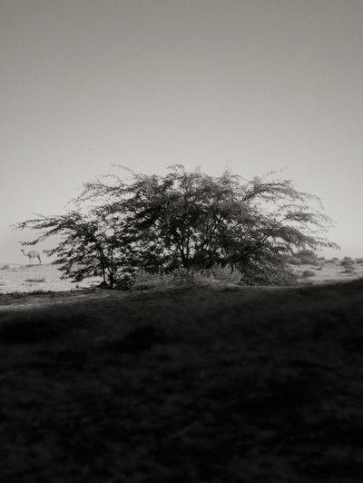The tree shadow warm Black And White Fineart_photobw Fine Art Photography EyeEm Monochrome EyeEm Best Shots - Nature Nature_collection Blackandwhite EyeEm Nature Lover Popular Photos