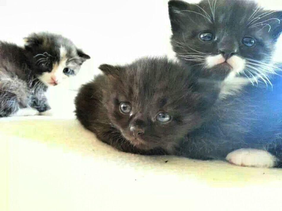 Cat Kittens Kitty