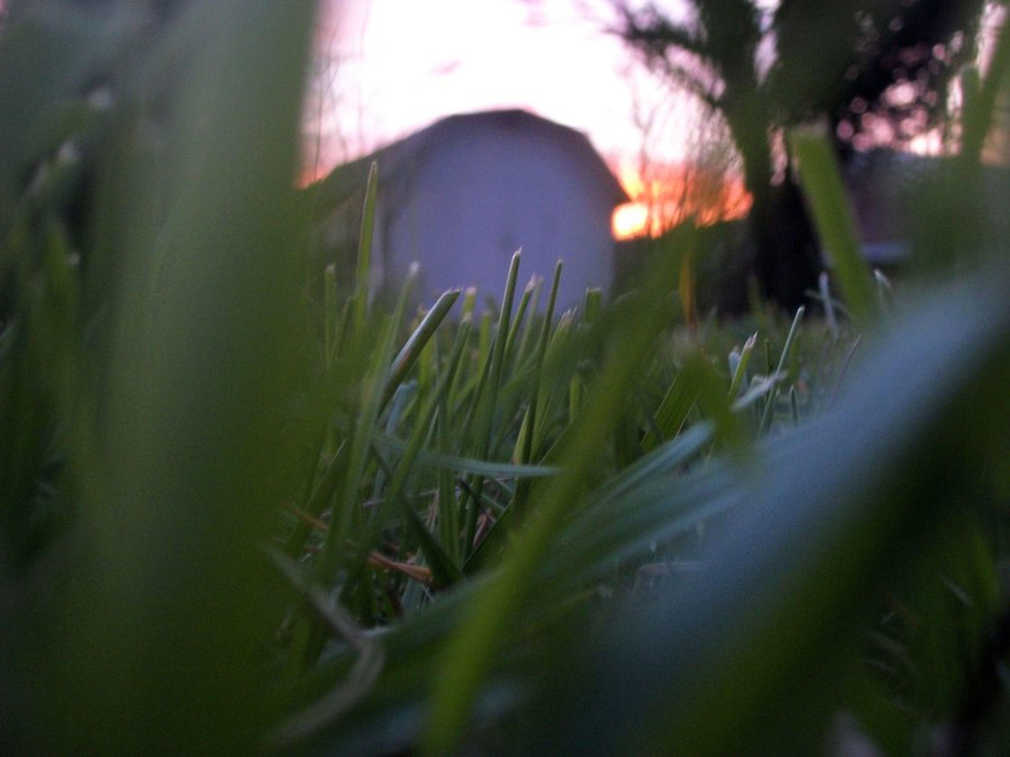 Snake Pov Grass Sunset
