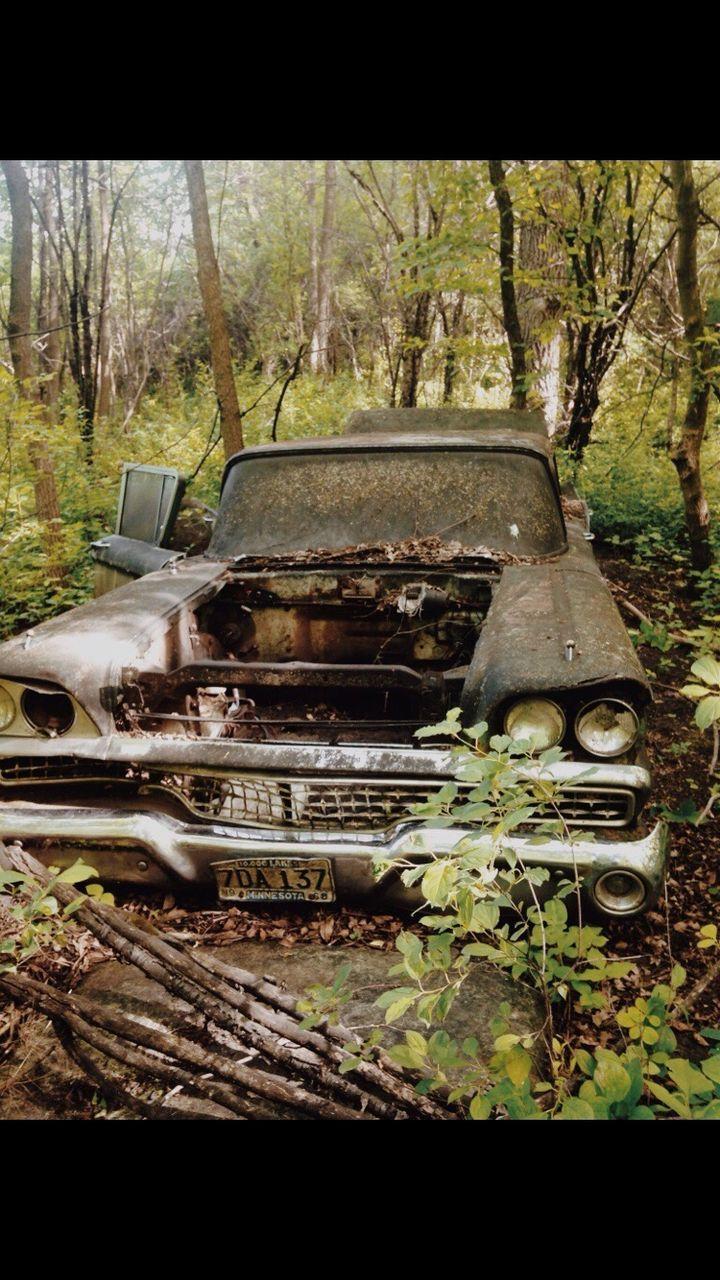 abandoned, forest, damaged, car, tree, day, transportation, no people, land vehicle, outdoors, nature, close-up