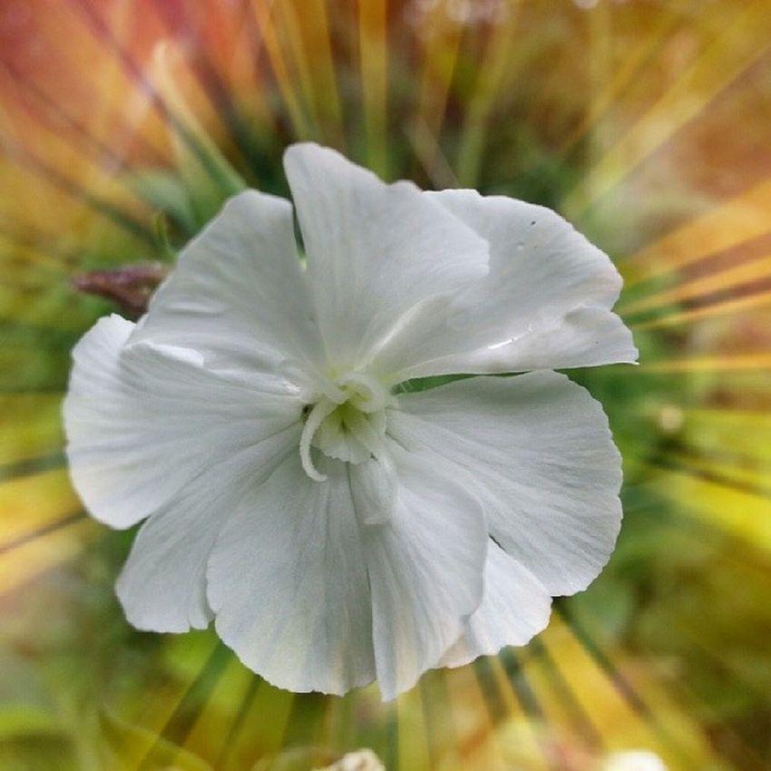 Bestnature Nature Bestflowers Flowers europe